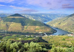 Essence of the Douro Valley
