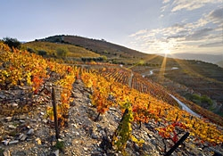 Wine Estates Douro Route